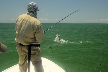 There should be good fly fishing action with tarpon in the coastal gulf during July. Jay Peck (top) and Frank Zaffino (bottom), both from Rochester, NY, each had good action catching and releasing tarpon on a fly on different trips in a previous July while fishing with Capt. Rick Grassett.
