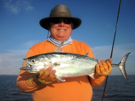 False albacore (little tunny) usually show up in the coastal gulf in September. Lynn Skipper, from Apollo Beach, FL, caught and released this one on a Grassett Snook Minnow fly while fishing with Capt. Rick Grassett in a previous September.