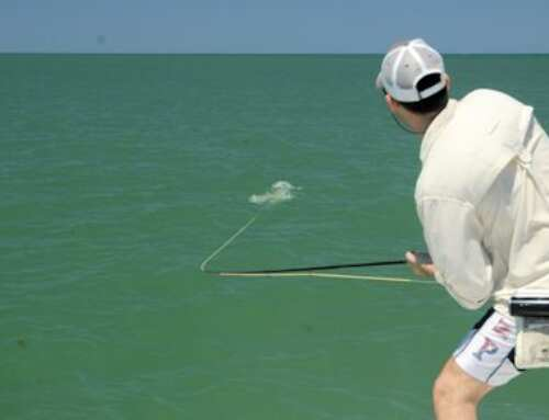 Capt. Rick Grassett Sarasota FL Fly Fishing Forecast for May 2019